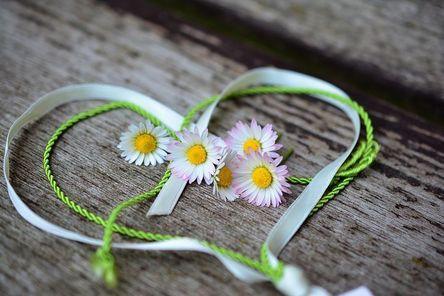 daisy-3392654__480.jpg