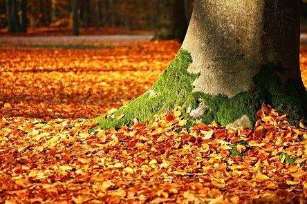 fall-foliage-1913485__340.jpg