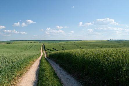 field-1631544__480.jpg