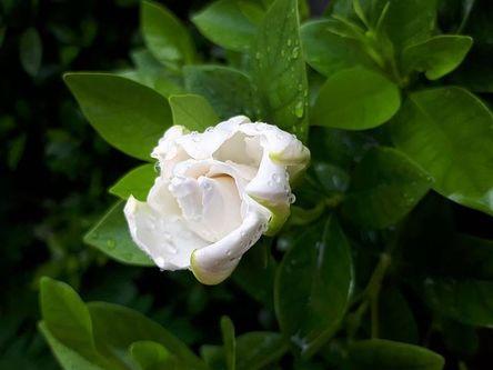 flora-3176594__480.jpg