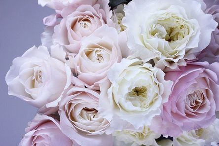 flower-1522260__480.jpg