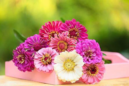 flower-3069038__480.jpg