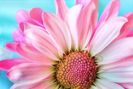 flower-3140492__480.jpg