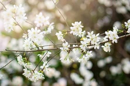 flower-6086288__480~2.jpg