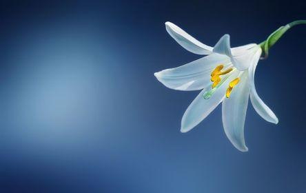 flower-729514__480.jpg