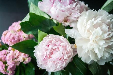 flower-823655_1280.jpg
