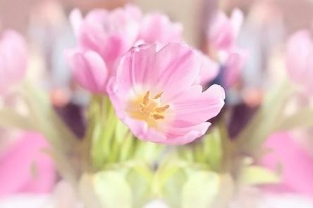 flowers-1338522__480~2.jpg