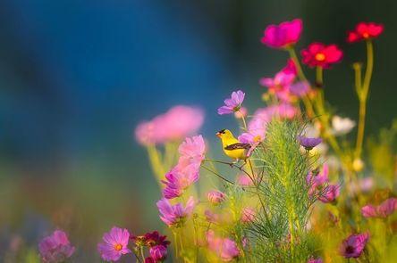 flowers-1835619__480.jpg