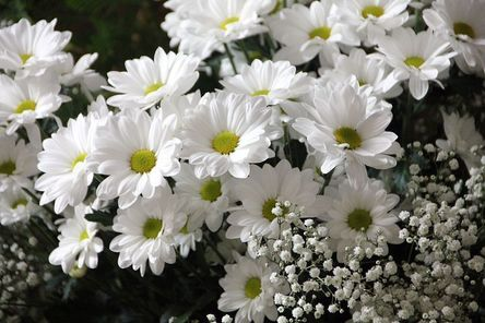 flowers-200602__480.jpg
