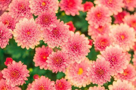 flowers-482575__480.jpg