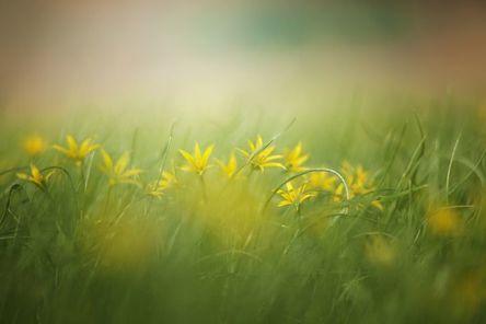 grass-3089791__480.jpg