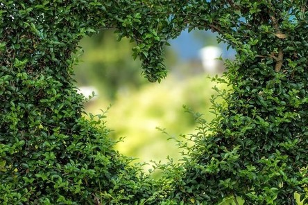 heart-1192662__480~2.jpg