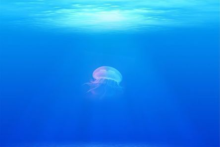 jellyfish-698521__480.jpg