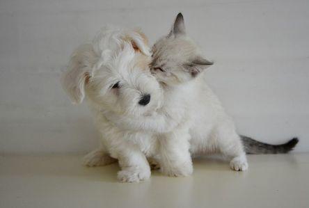 kiss-2728106__480.jpg