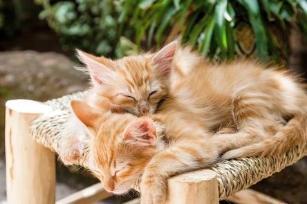 kittens-1916542_1280~2.jpg