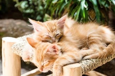 kittens-1916542__480~2.jpg
