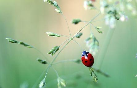 ladybug-1478029__480.jpg