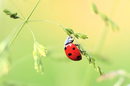 ladybug-1480102_1280~2.jpg