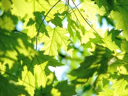 leaves-291024_1280~2.jpg