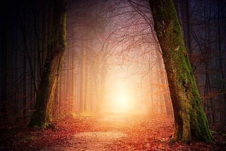 nature-3151869__480~2.jpg