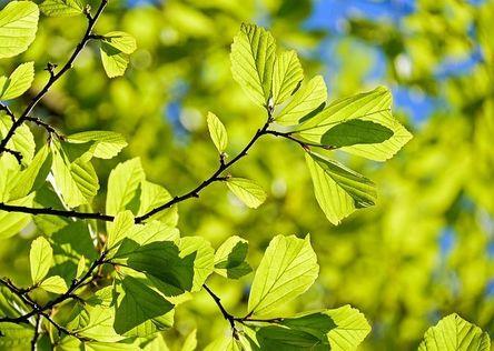 persian-oak-wood-3064187__480.jpg