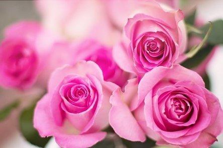 pink-roses-2191631__340.jpg