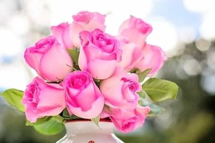 pink-roses-2191636__480~2.jpg