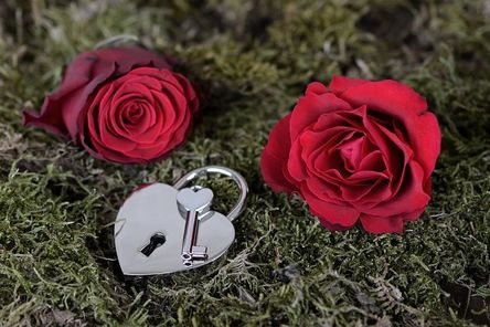 rose-2321513__480.jpg