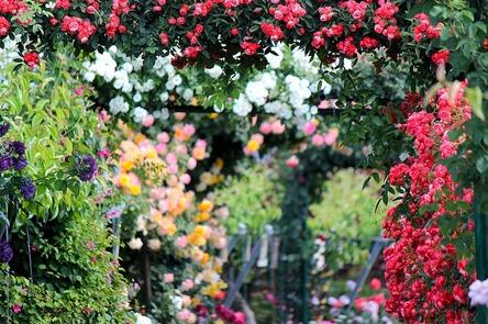 rose-2721846_1280.jpg