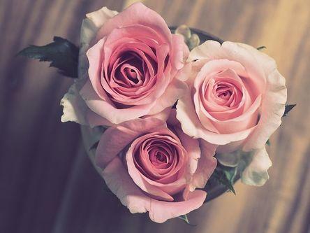 rose-3072698__480.jpg