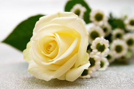 rose-3159554__480.jpg