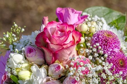rose-3363810__480.jpg