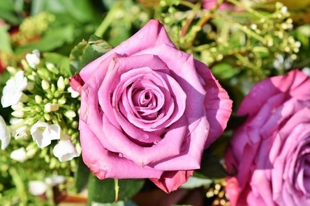 rose-3412884__480~2.jpg