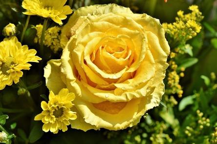rose-3425816_1280.jpg