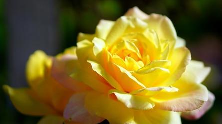 rose-4399647_1280.jpg