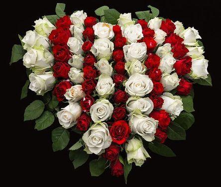 roses-1040758__480.jpg
