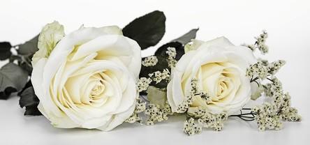 roses-2823103__480~2.jpg