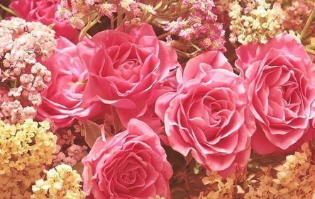 roses-3699963__480.jpg