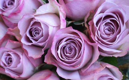roses-3901824__480.jpg