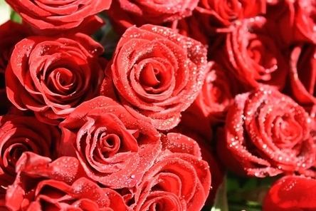 roses-4884068__480~2.jpg