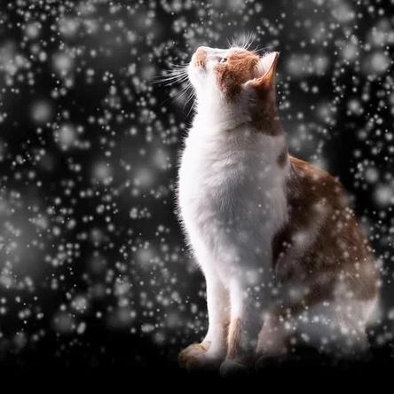 snow-2987128__480~2.jpg