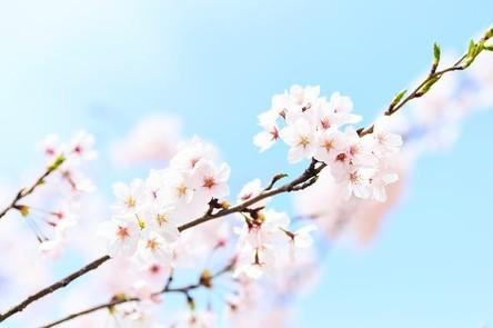 spring-2218771__480~2.jpg