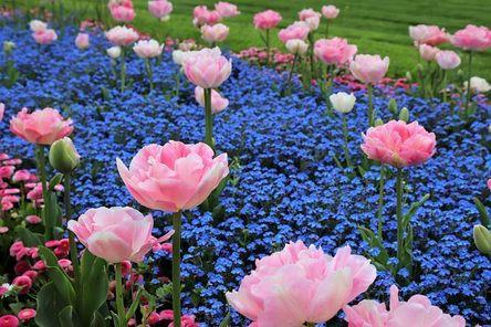spring-4147371__480.jpg