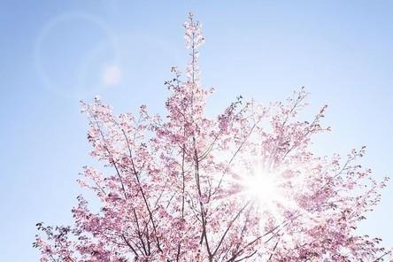 spring-733507__480~2.jpg