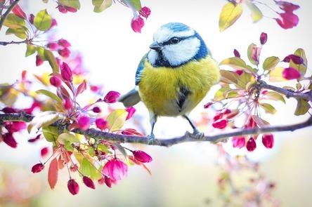 spring-bird-2295434_960_720.jpg