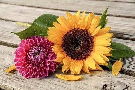 sunflower-4843834__480~2.jpg