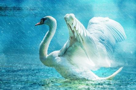 swan-584412_1280.jpg