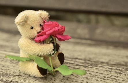 teddy-889892__480.jpg