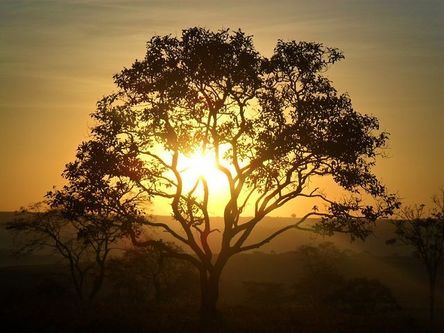 tree-1784750__480.jpg