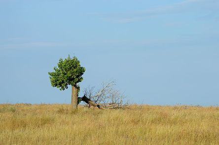 tree-2712562__480.jpg